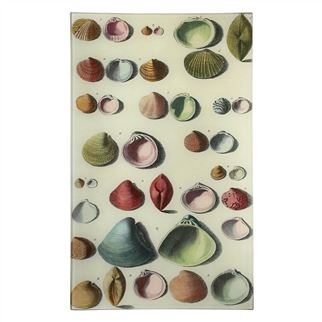 John Derian Chart of Small Shells Plate