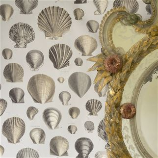 Captain Thomas Browns Shells Oyster Wallpaper | John Derian