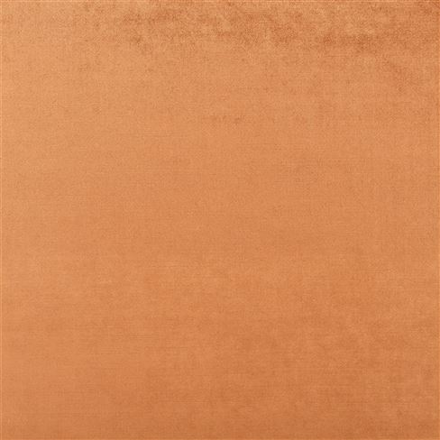 Vicenza Russet